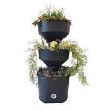 horta verde vida preta sem rodizio cultivo