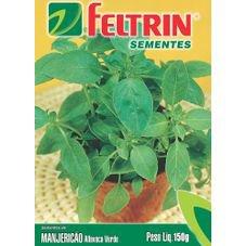 semente manjericao alfavaca verde