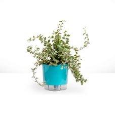 vaso autoirrigavel raiz verde raiz