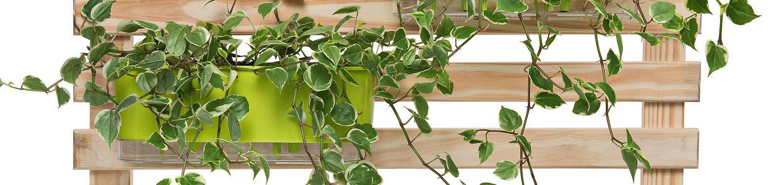 jardineira 40 cm raiz trelica verde
