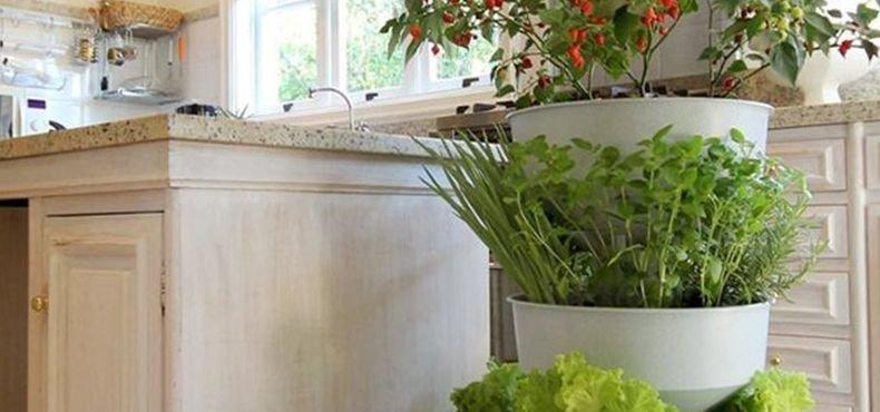 Você ainda não conhece a Horta Verde Vida? 4 Fatos Surpreendentes