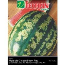 semente melancia crimson select plus