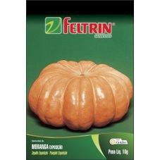 semente moranga exposicao feltrin