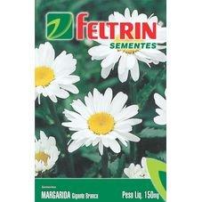 semente flor margarida gigante branca feltrin