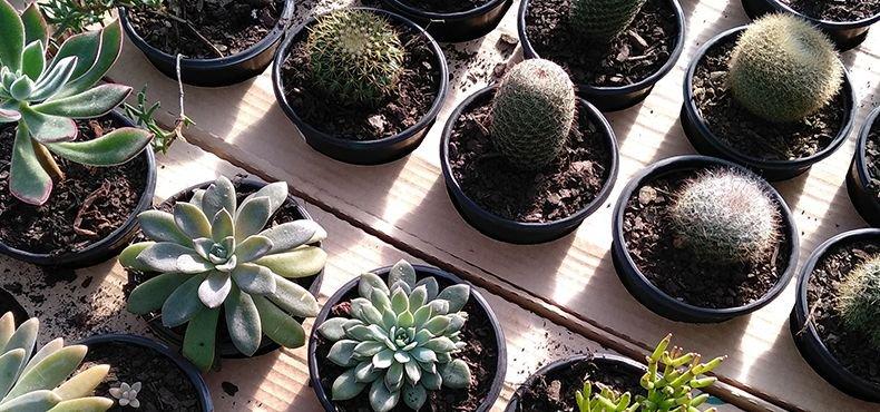 Curiosidades sobre o cultivo com Potes tipo Holambra Nutriplan