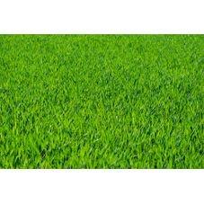 semente grama sao carlos jardim
