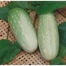 pepino esmeralda caipira feltrin eco