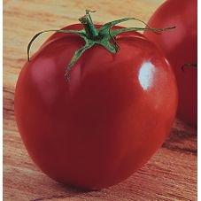tomate santa clara feltrin