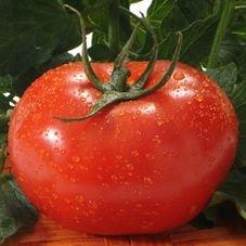 tomate gaucho melhorado feltrin eco