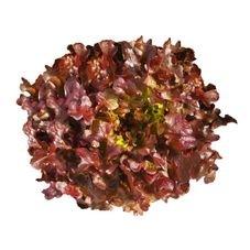 semente alface betania eco feltrin