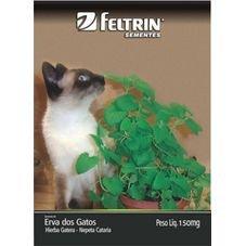 semente erva gato