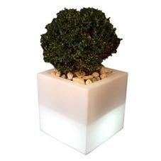 cachepot iluminado ouvert vase usare