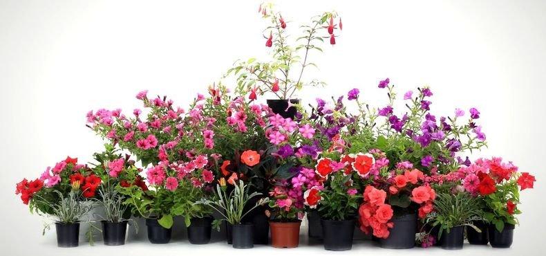 Como escolher o vaso certo para minhas plantas