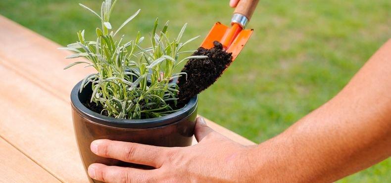 Como cultivar em Vasos e Jardineiras Autoirrigáveis Nutriplan