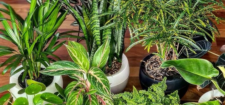 Como cultivar nos vasos autoirrigáveis Botanika?