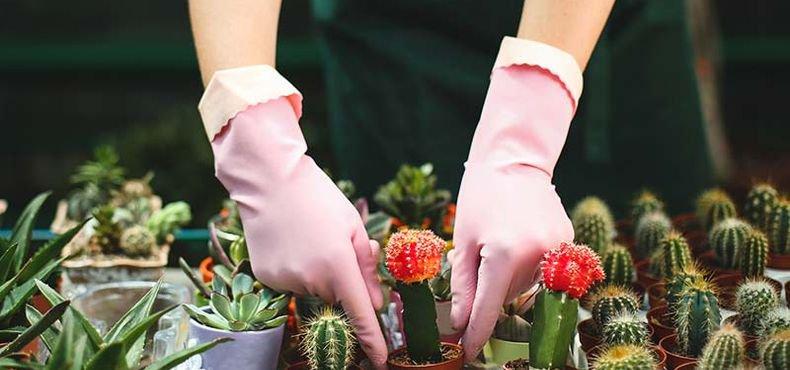 Dicas para cultivar Cactos e Suculentas em casa