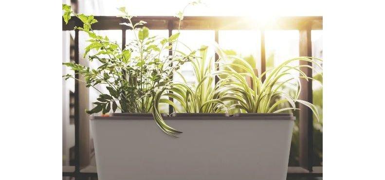 Horta Autoirrigável Tramontina, saiba como montar e cultivar