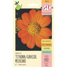 semente girassol mexicano isla